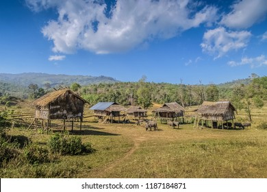 view of small huts and buffalos on the rice fields in winter with blue sky background, this is the highest rice fields plantation in Thailand, Doi Lang, Mae Ai, Fang, Chiang Mai, Thailand.