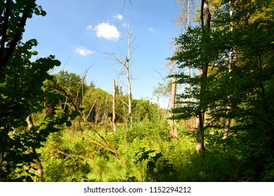 View of a small pond located next to a lush moor seen through some high shrubs, trees, and other greenery, with some tree trunks visible, as well as a cloudless summer sky above the horizon
