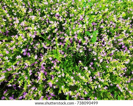 View Small Purple White Flowers Green Stock Photo Edit Now