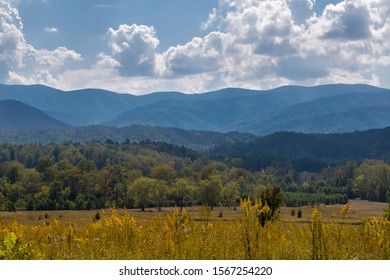 View of the Smokies with yellow flowers in the foreground and white clouds in the blue sky