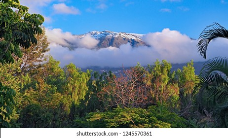 View of the snow covered mountains of Teide National Park, seen from Taoro Park in Puerto de la Cruz. In the foreground many evergreen plants and trees.
