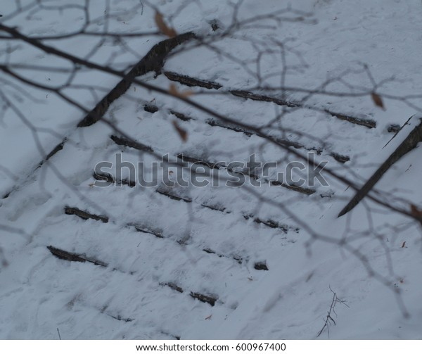 view of snow-covered steps of a flute and a branch of a tree