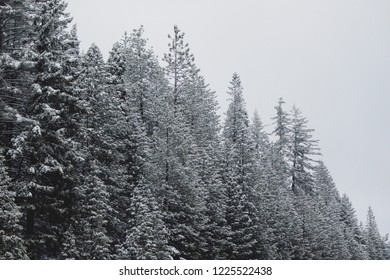 View of snowy treetops.