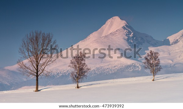 View of the snowy winter landscape in the background High Tatras - Slovak Republic.