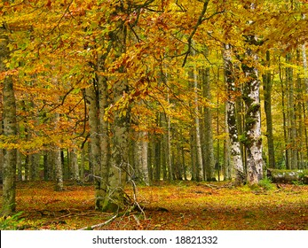 View of some trunks of a forest in autumn