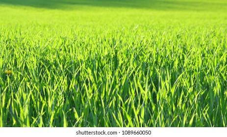 view sown fields , southern Bohemia, Czech Republic