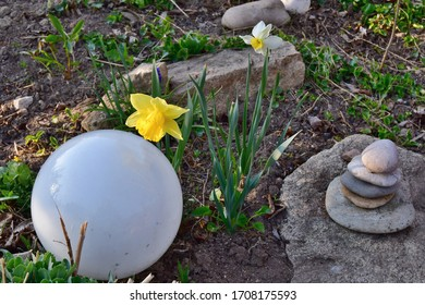view of spring flowers, narcissus, South Bohemia, Czech Republic