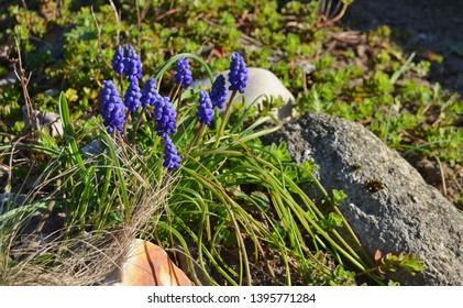 view of spring flowers, South Bohemia, Czech Republic