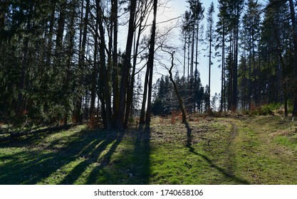 view of spring forest road, south Bohemia, Czech Republic