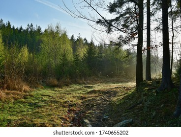 view spring forest, southern Bohemia, Czech Republic