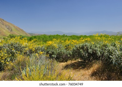 View of springtime wildflowers in the San Jacinto Valley region of Southern California.