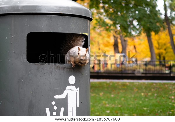 View of a squirrel in a trash can, in Montreal