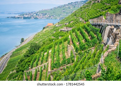 View of steep Lavaux terraced vineyards over Geneva lake in Dezaley Lavaux Vaud Switzerland