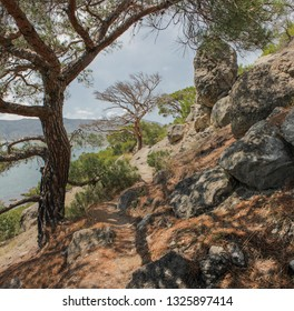 View of the steep pine forest overlooking the sea on a hot summer day. Concept: summer vacation in uncharted corners of the Mediterranean.