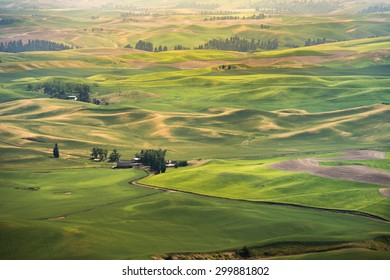 View of Steptoe Butte, Palouse Country in eastern Washington