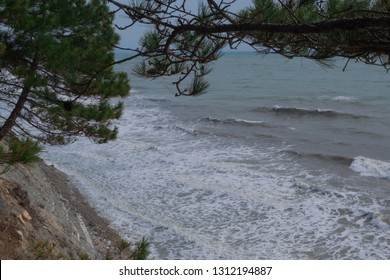 View of the stormy sea from the mountain through the pine branches