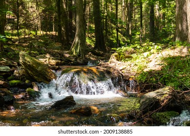 view of a stream with a waterfall in the middle of a dense forest