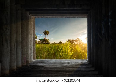 View of sugar palm tree in rice field with morning sunlight looking from old dark cement room,concept happ life outside box