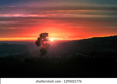 A view of the sun setting over rolling California hills and mountains and the city of Los Angeles from atop a mountain, with a tiny tree silhouetting in the dimming orange light of the sun.