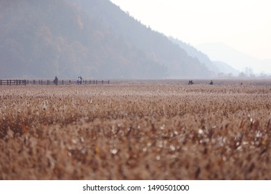 a view of Suncheon's reed beds