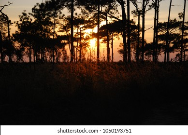 View of sunset landscape pine tree forest .