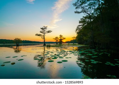 View of sunset with lily pads at Caddo Lake near Uncertain, Texas