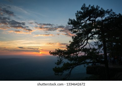 View of sunset and pine trees taken from Lom Sak cliff, Phu Kradueng National Park, Loei Province