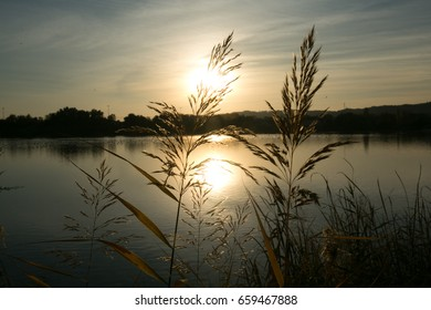 view of sunset with trees and water reflection in a lake.