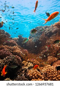 View of the surface of the water from the five-meter depth of a coral reef with a lot of small fish