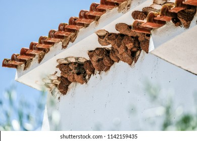 View of Swallow nests on old houses in Albufeira Portugal in Summer
