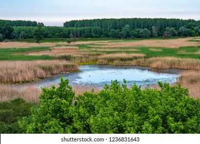 View of a swamp in Serbia
