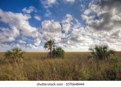 View of the Taylor Slough in the Everglades National Park.. A slough is slow moving body of water.