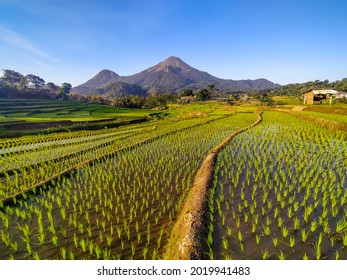 View of the terraced rice fields and the mountain at Trawas Mojokerto Indonesia - Shutterstock ID 2019941483