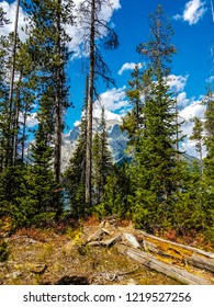The view of the Teton mountains is partially hidden by trees,  in this beautiful view taken from the Leigh Lake Trail in the Grand Teton NP in Wyoming. Dead logs are seen lying on the ground.