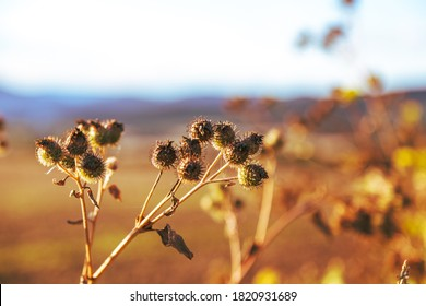 view of thistles at sunset in autumn