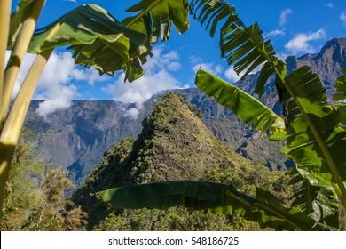 view through banana trees of a mountain range on Reunion Island