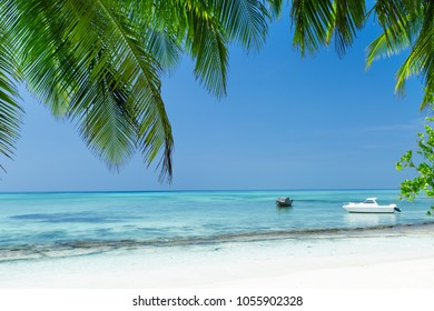 View through coconut palm trees on seaside, tropical nature with bounty beach and azure sea, travel destinations.