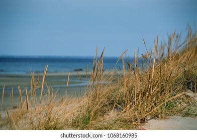 A view through the dune grass - Mayflower Beach, Dennis, MA.