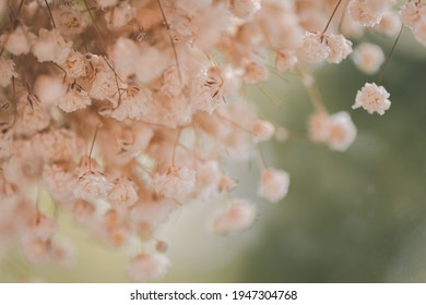 The view through the glass of dry white gypsophila flowers, Cinematic tone. - Shutterstock ID 1947304768