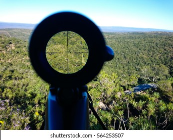 View through a hunting rifle scope