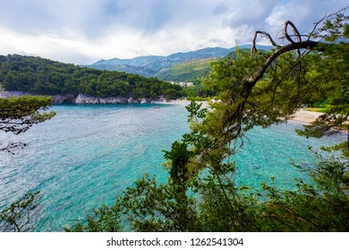 View through the pine branches on the mountainous shore from the sea.Montenegro.