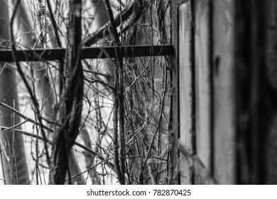 view through a romantic window in a lost place with wild ivy