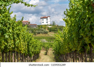 View through rows of vineyards on the Village of Ceglo, also Zegla in famous Slovenian wine growing region Goriska Brda, olive trees below rustic villa, lit by sun, village on top of hill with villa