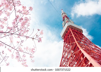 View of Tokyo tower and pink cherry blossom(sakura) with blue sky during winter season of Japan in uprisen angle.