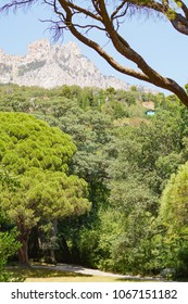 A view of the top of the Ai-Petri mountain from the Vorontsov garden through the branches of trees. Alupka, Crimea