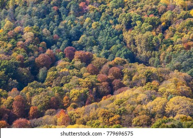 View from the top of a forest in the fall