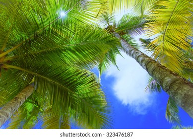 view of the top of a palm tree blue sky sun's rays