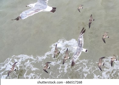 view from the top of seagulls flying above the sea with small waves in the ocean