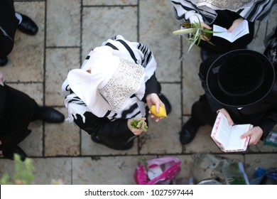 """View from top of ultra orthodox Jewish man praying from a prayerbook and holding an """"Etrog"""" (hebrew for citron fruit) in front of a wall"""