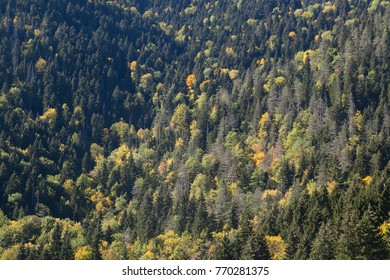 view from top of yellow forest in the fall
